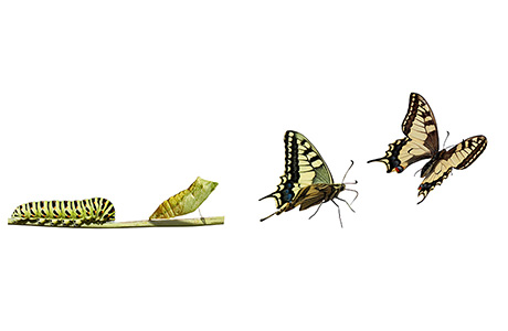 Transcreation Services Colourful Butterfly Life Cycle